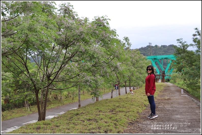 紅葉溪防汛道路苦楝花-2021-03-35.jpg