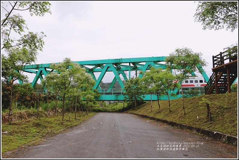 紅葉溪防汛道路苦楝花-2021-03-52.jpg