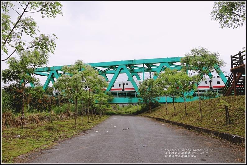 紅葉溪防汛道路苦楝花-2021-03-51.jpg