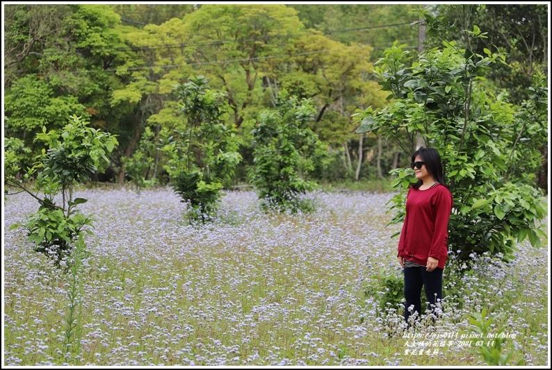 紫花藿香薊-2021-03-07.jpg