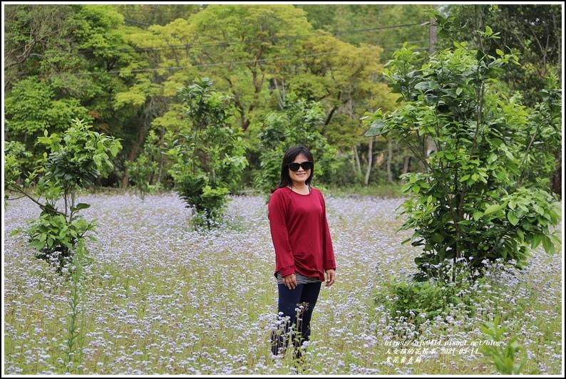 紫花藿香薊-2021-03-19.jpg