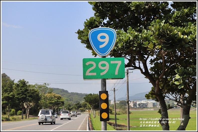 富里石牌孤挺花-2021-04-45.jpg