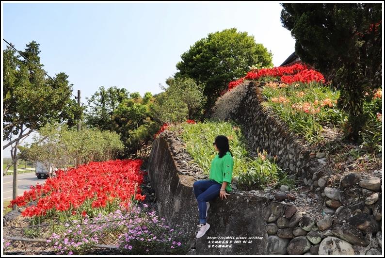 富里石牌孤挺花-2021-04-51.jpg