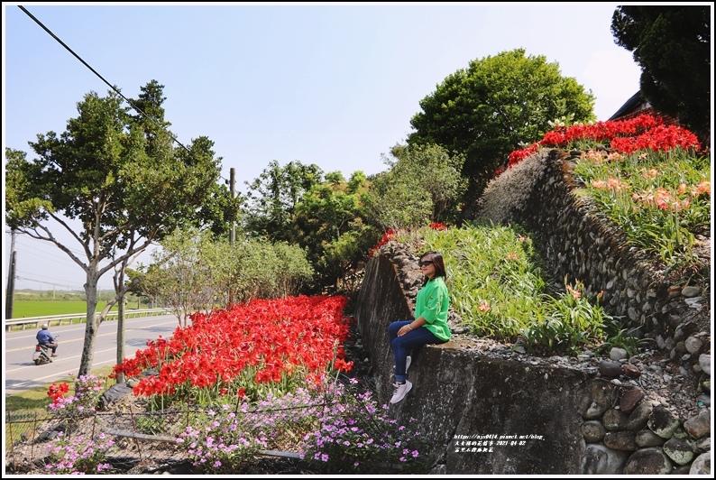 富里石牌孤挺花-2021-04-53.jpg