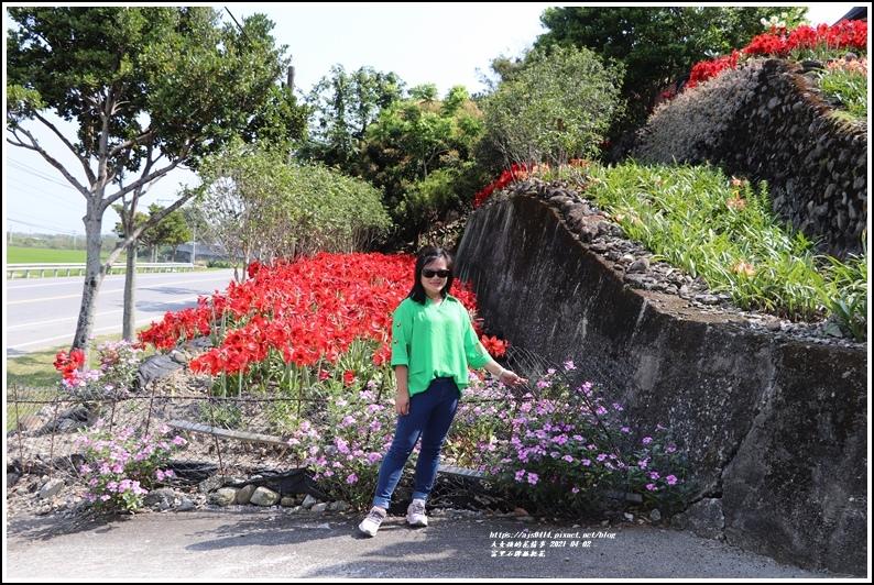 富里石牌孤挺花-2021-04-58.jpg