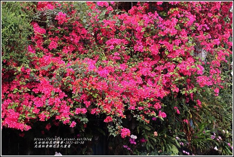 光復九重葛(松青鮮花店)-2021-03-05.jpg