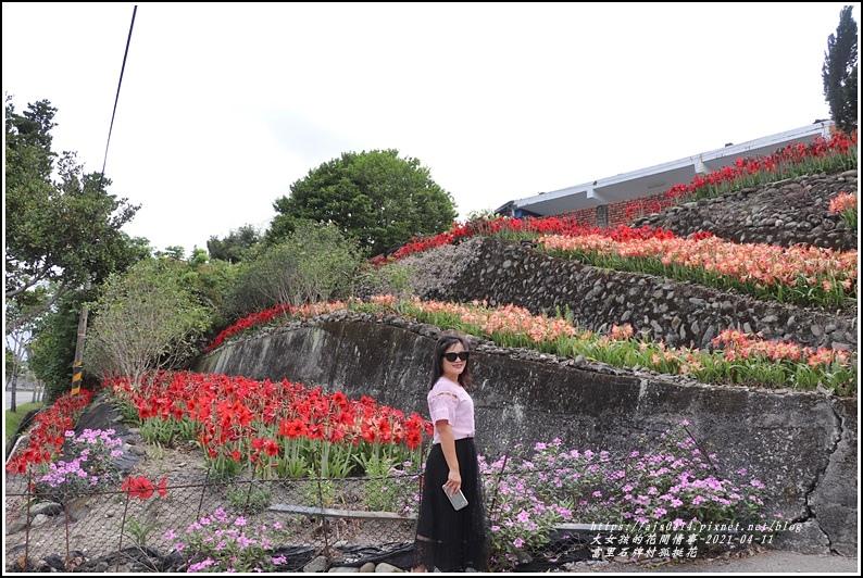 富里石牌孤挺花-2021-04-75.jpg