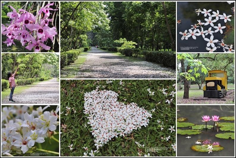 吉安南華林業園區-2021-04-77.jpg