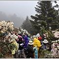 合歡山小奇萊步道玉山杜鵑-2021-04-19.jpg