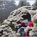 合歡山小奇萊步道玉山杜鵑-2021-04-20.jpg