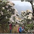 合歡山小奇萊步道玉山杜鵑-2021-04-33.jpg