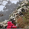 合歡山小奇萊步道玉山杜鵑-2021-04-34.jpg