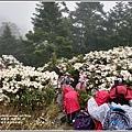 合歡山小奇萊步道玉山杜鵑-2021-04-42.jpg