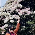 合歡山小奇萊步道玉山杜鵑-2021-04-46.jpg