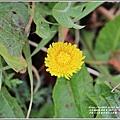 合歡山小奇萊步道玉山杜鵑-2021-04-52.jpg