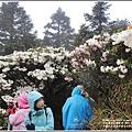 合歡山小奇萊步道玉山杜鵑-2021-04-103.jpg