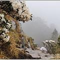 合歡山小奇萊步道玉山杜鵑-2021-04-105.jpg