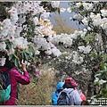 合歡山小奇萊步道玉山杜鵑-2021-04-106.jpg