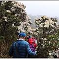 合歡山小奇萊步道玉山杜鵑-2021-04-107.jpg