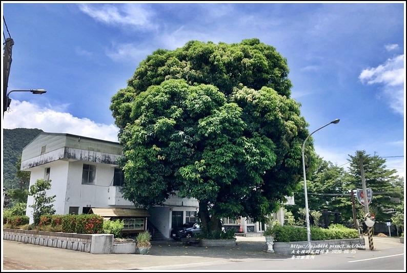 春日齊柏林樹-2020-06-01.jpg