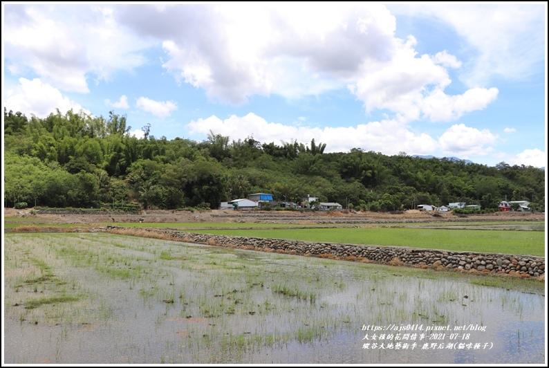 縱谷大地藝術季-鹿野后湖(貓咪種子)-2021-07-12.jpg