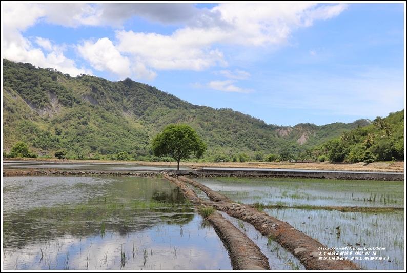 縱谷大地藝術季-鹿野后湖(貓咪種子)-2021-07-13.jpg