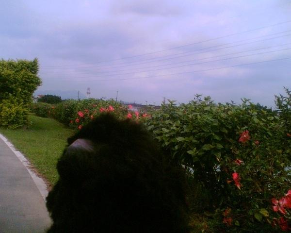 影像033.j