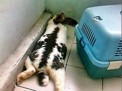 太熱趴這樣比較舒服.jpg