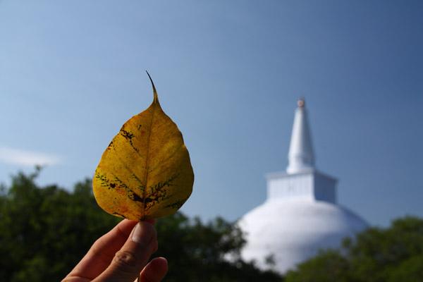 佛塔是模仿菩提葉的形狀