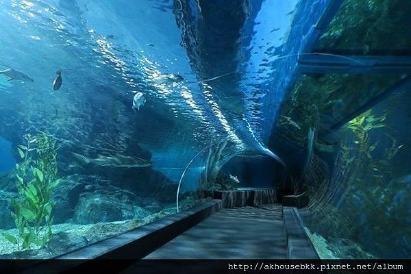 AK Travel_海洋世界132.jpg