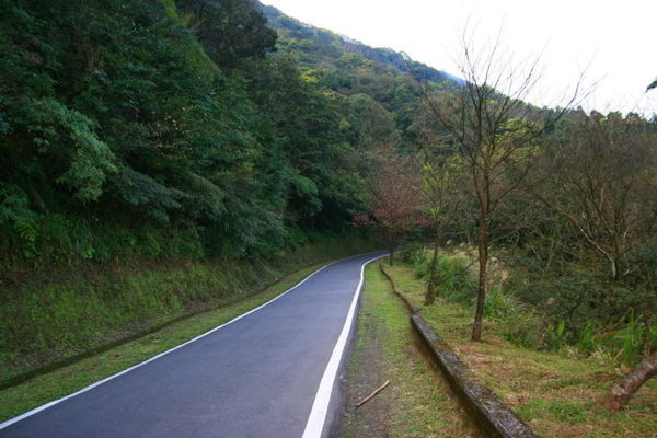 道路景色.jpg