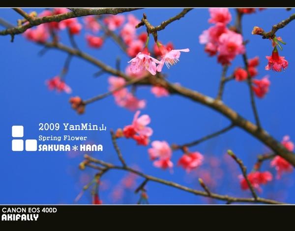 2009陽明山花季49.jpg