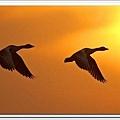 bird 6.jpg