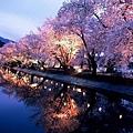 日本春天4.jpg