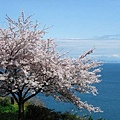 日本春天11.jpg