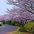 日本春天13.jpg