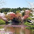日本春天10.jpg