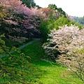 日本春天9.jpg