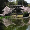 日本春天5.jpg