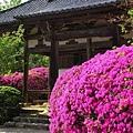 日本春天2.jpg