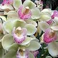 orchids_480_se