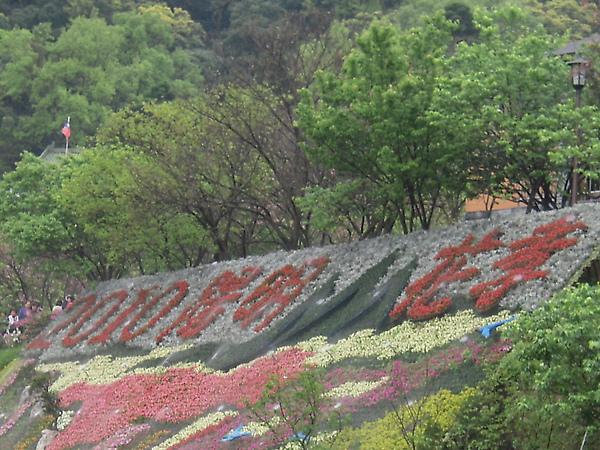 2010陽明山花季 088.jpg
