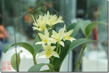 DSC00984_小小的蘭花很可愛
