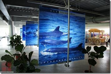 DSC02744_鯨魚海豚介紹