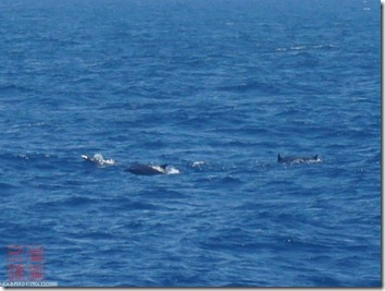 DSC02921_海豚出現了