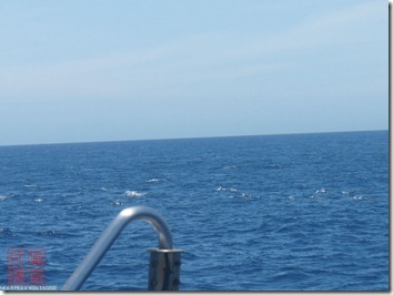 DSC02995_海面上出現一群海豚