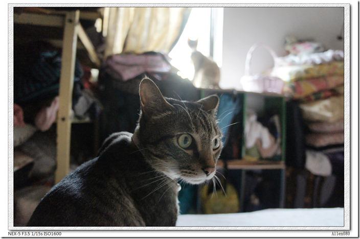 DSC03482_有貓佔據我的窗台了