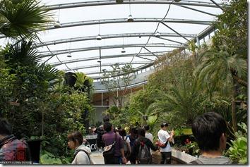 DSC00837_各種熱帶植物