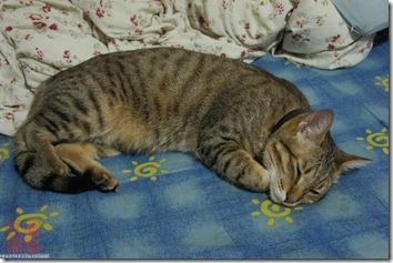 DSC02089_黑糖在別人的房間睡得很開心