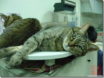 CIMG6125_獸醫院的妹妹